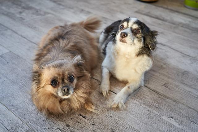 tratamientos naturales para que no se le suban las garrapatas a los perros