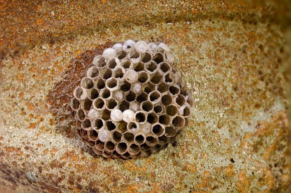 nidos de avispas